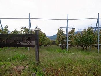 黒潮会・甲州ワイン旅(2011.10.15) 10
